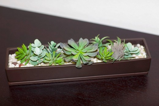 Stock Photo: 1825-4768 Close_up of a houseplant on a sideboard