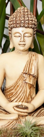 Statue of Buddha with a house plant : Stock Photo