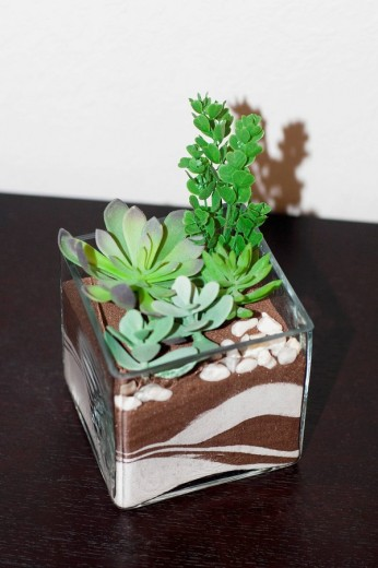 Stock Photo: 1825-5851 Close_up of a houseplant on a sideboard