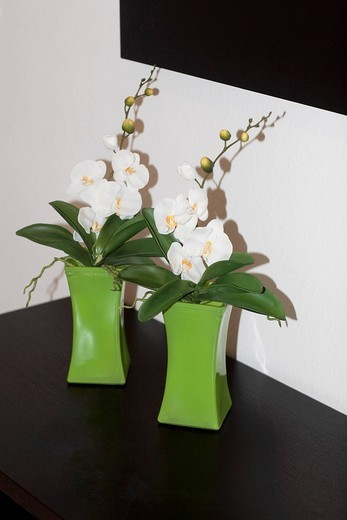 Close_up of houseplants on a sideboard : Stock Photo