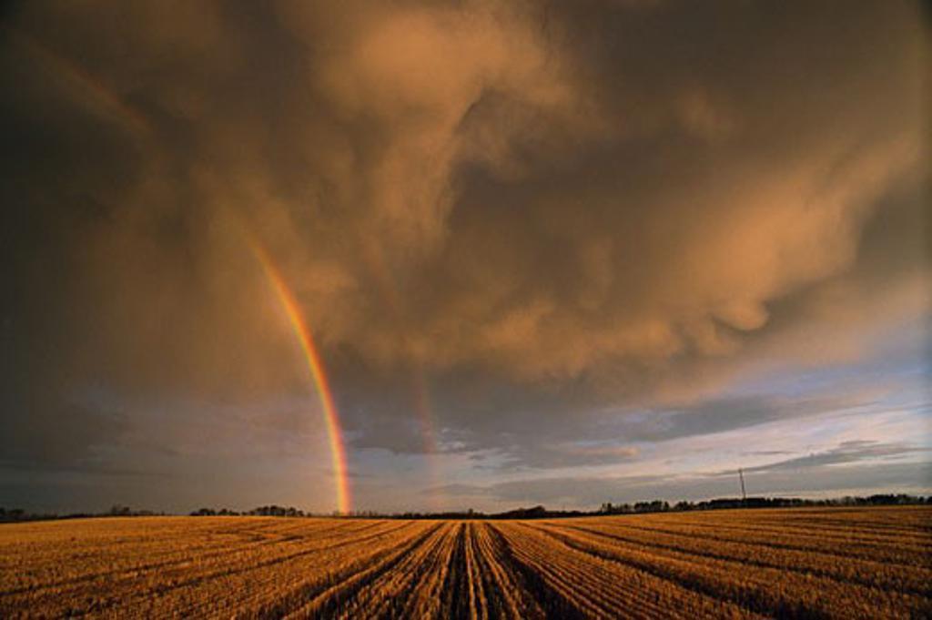 Stock Photo: 1828R-1361 Alberta, Canada