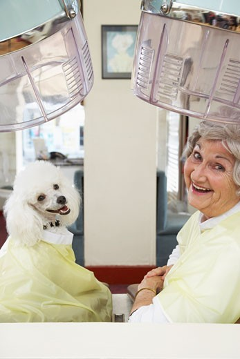 Stock Photo: 1828R-15138 Woman in Hair Salon with Poodle