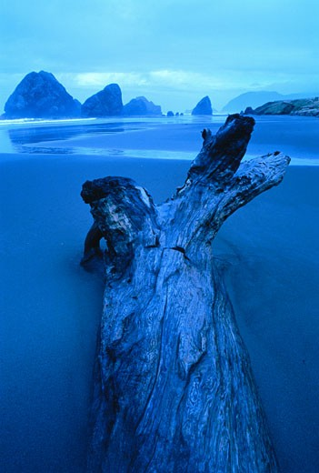 Stock Photo: 1828R-2032 Driftwood on Beach Pistol River State Park Oregon, USA