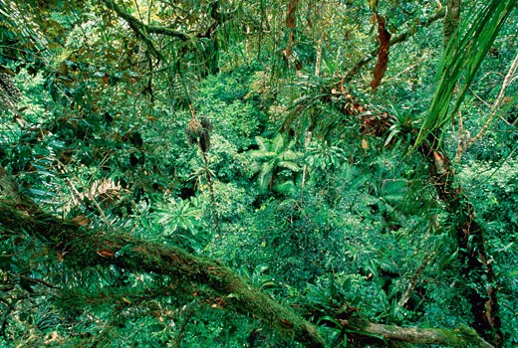 Stock Photo: 1828R-2094 Tropical Rainforest Amazon Basin Napo Province, Ecuador