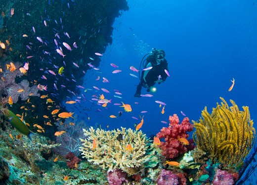 Woman Scuba Diving    : Stock Photo