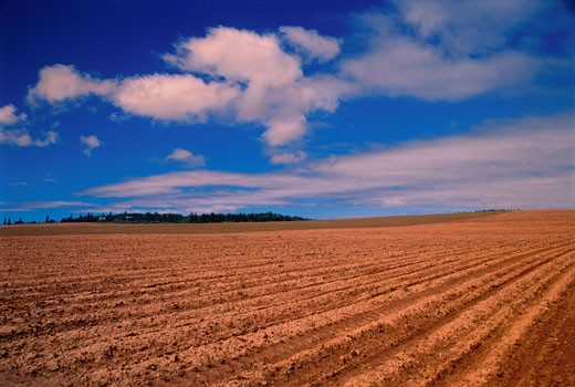 Stock Photo: 1828R-2614 Plowed Field Near Norboro, Prince Edward Island, Canada