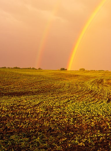Stock Photo: 1828R-2752 Rainbow over Field Near Sherwood Park Alberta, Canada