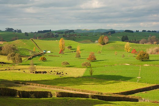 Farmland, Tihiroa, North Island, New Zealand    : Stock Photo