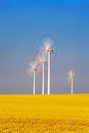 Stock Photo: 1828R-29813 Wind Turbines and Canola Field
