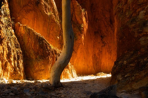 Stock Photo: 1828R-30373 Standley Chasm, West MacDonnell National Park, Northern Territory Australia
