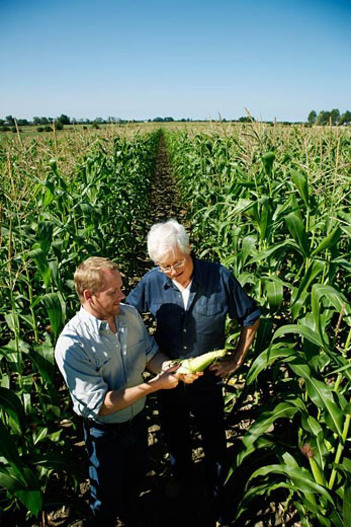 Stock Photo: 1828R-33760 Men Checking Corn in Cornfield