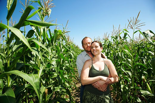 Portrait of Couple in Cornfield    : Stock Photo