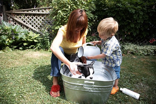 Mother and Son Washing Dog    : Stock Photo