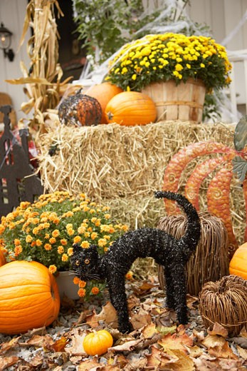Stock Photo: 1828R-34567 Autumn Display with Decorative Black Cat