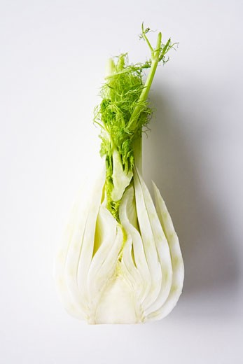 Stock Photo: 1828R-38288 Fennel