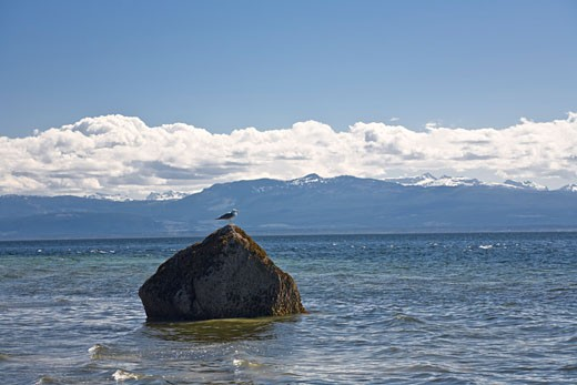 Stock Photo: 1828R-38377 Gull on Rock in Ocean, Cortes Island, British Columbia, Canada