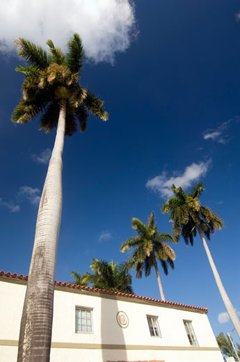 Palm Trees and Building, South Beach, Miami Beach, Miami, Florida, USA    : Stock Photo
