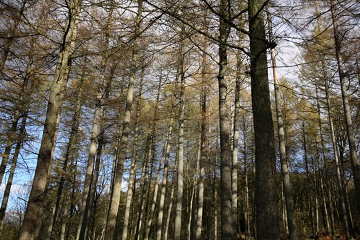 Stock Photo: 1828R-39082 Trees in Forest
