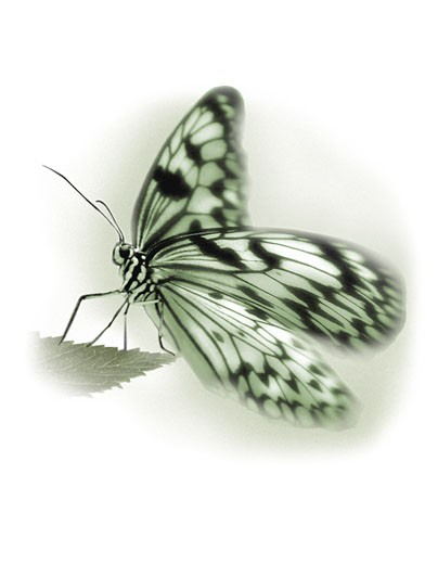 Stock Photo: 1828R-4012 Close-Up of Butterfly on Leaf