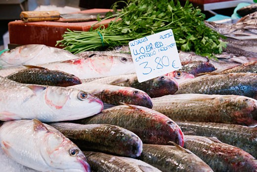 Stock Photo: 1828R-40718 Seafood on Display, Santa Catarina Market, Barcelona, Catalunya, Spain