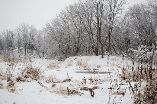 Milne Park Conservation Area and Rouge River in Winter, Markham, Ontario, Canada    : Stock Photo