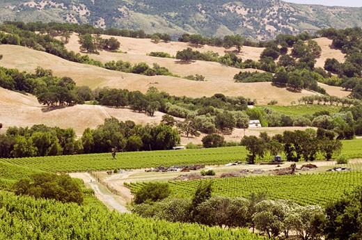 Stock Photo: 1828R-43242 Vineyard, Napa Valley, California, USA