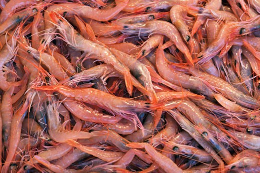 Stock Photo: 1828R-44361 Shrimp, Catania, Province of Catania, Sicily, Italy