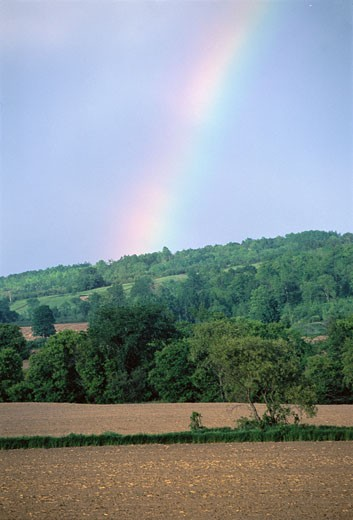Rainbow over Field and Trees, Ontario, Canada    : Stock Photo