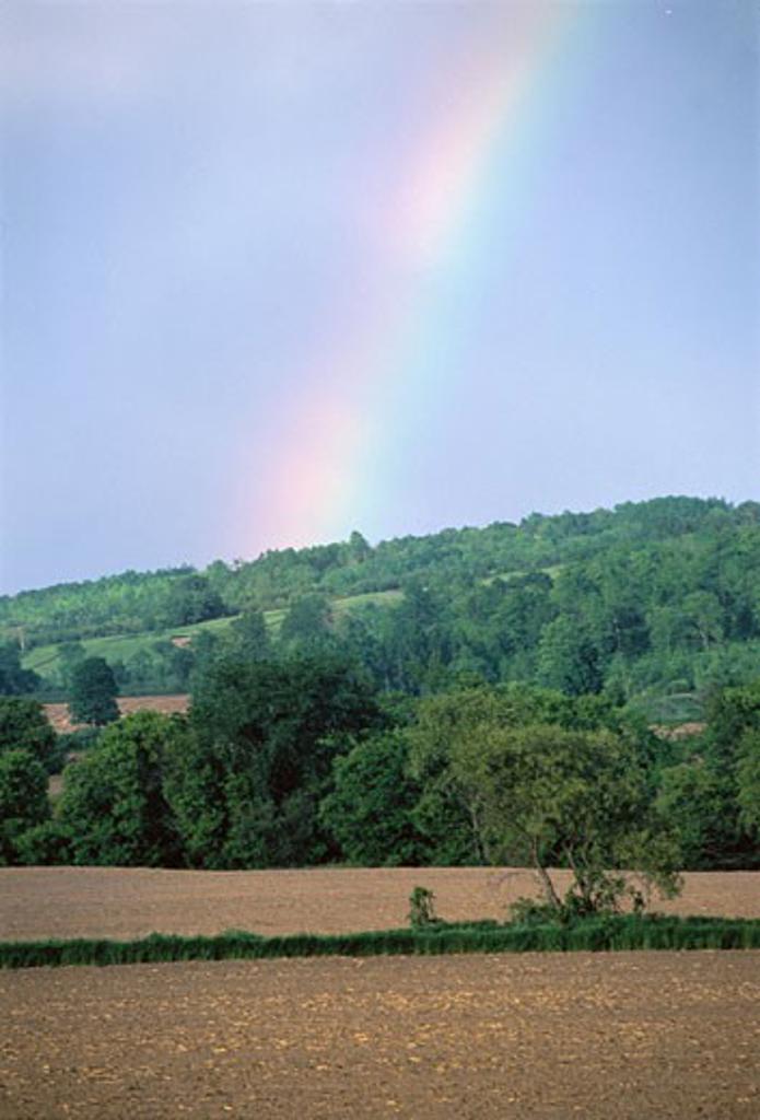Stock Photo: 1828R-4469 Rainbow over Field and Trees, Ontario, Canada