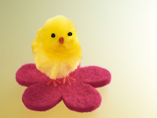 Yellow Easter Chick    : Stock Photo