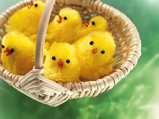 Stock Photo: 1828R-45145 Easter Chicks in Basket