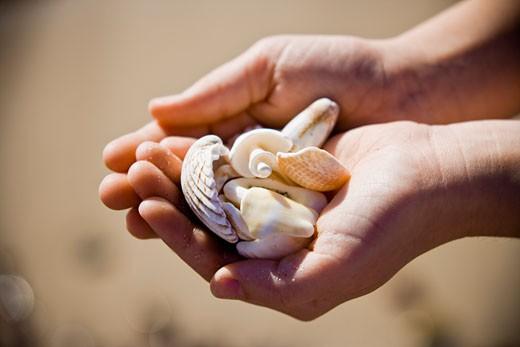 Stock Photo: 1828R-45994 Hands Holding Seashells on Beach