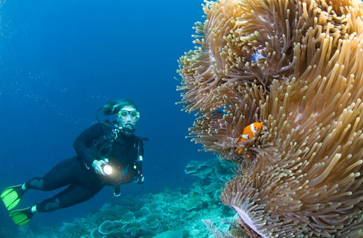 Stock Photo: 1828R-46604 Scuba Diver and Anemone Fish, Raja Ampat, West Papua, Indonesia