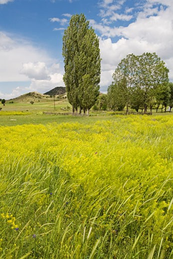 Stock Photo: 1828R-46835 Countryside between Ankara and Istanbul, Turkey