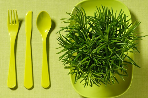 Stock Photo: 1828R-49356 Cutlery and Plant on Plate