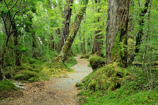 Stock Photo: 1828R-52296 Lake Gunn Nature Walk, Fjordland National Park, South Island, New Zealand