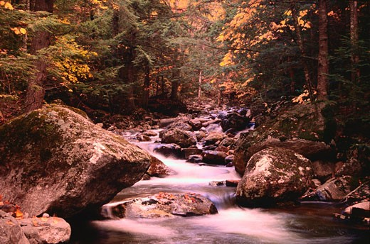 Nineteen Mile Brook, White Mountains National Forest, New Hampshire, USA    : Stock Photo