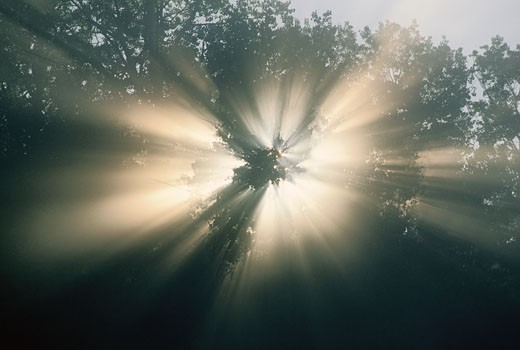 Stock Photo: 1828R-56718 Sun Shining Through Tree