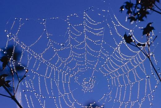 Stock Photo: 1828R-57239 Spiderweb, Algonquin Provincial Park, Ontario, Canada