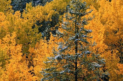 Stock Photo: 1828R-57444 Fall Colours, Near Watson Lake, Yukon, Canada