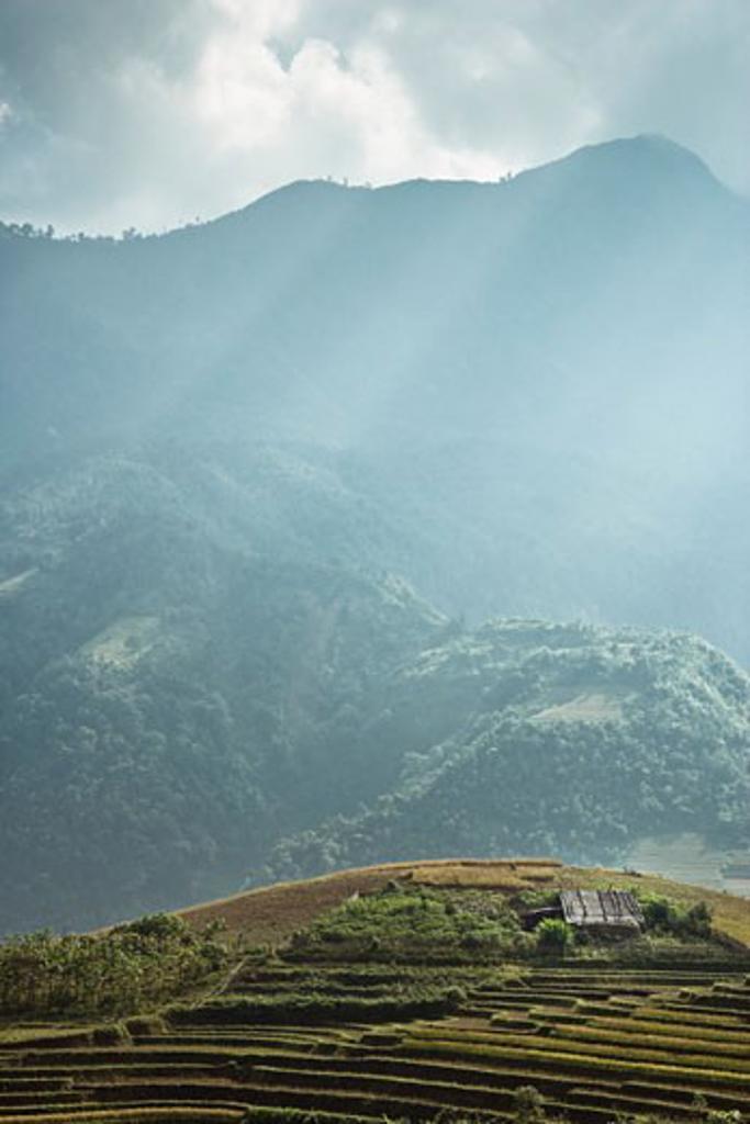 Stock Photo: 1828R-58915 Rice Fields, Sa Pa, Lao Cai Province, Vietnam