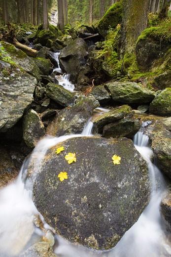 Stream Running over Mossy Rocks, Hohe Tauren National Park, Salzburg, Austria    : Stock Photo