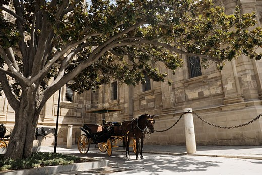 Stock Photo: 1828R-59827 Horse Drawn Carriage, Seville, Spain
