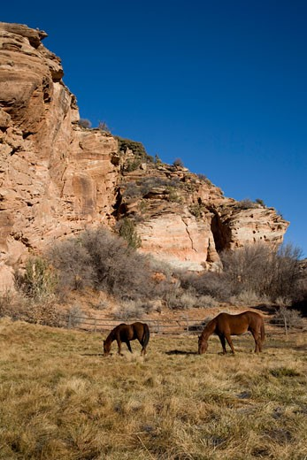 Stock Photo: 1828R-61007 Horses at Best Friends Animal Sanctuary, Kanab, Utah, USA