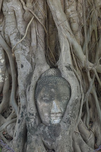 Carving, Ayutthaya, Thailand    : Stock Photo