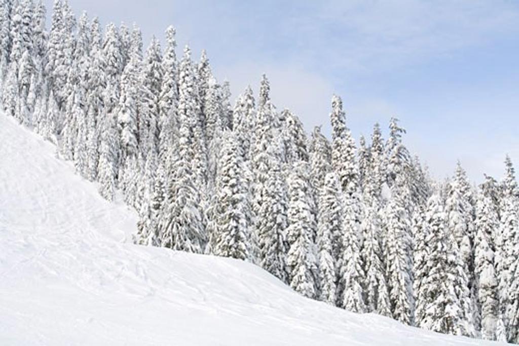 Stock Photo: 1828R-62595 Snoqualmie Pass, Washington, USA