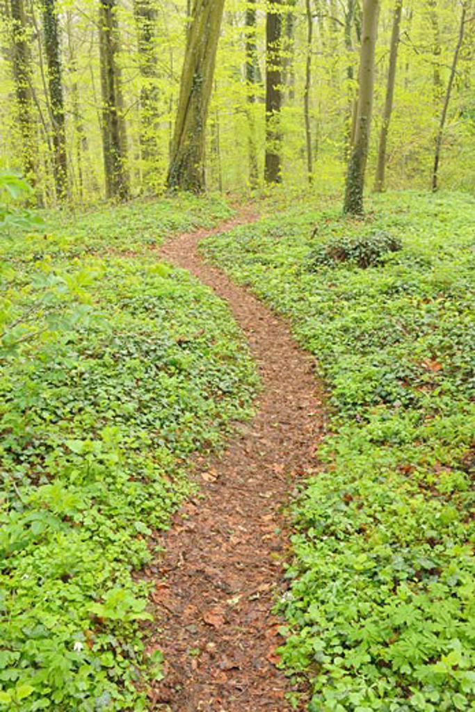 Stock Photo: 1828R-63634 Pathway Through Forest, Spessart, Bavaria, Germany