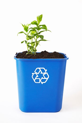 Plant and Soil in Recycling Bin : Stock Photo