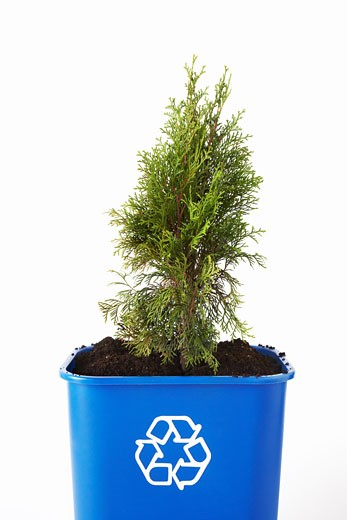 Stock Photo: 1828R-63829 Tree Planted in Recycling Bin