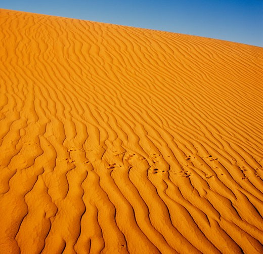 Stock Photo: 1828R-64378 Sand Dunes, Simpson Desert, Australia